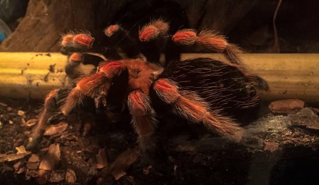 Fascinujúci svet pavúkov a škorpiónov