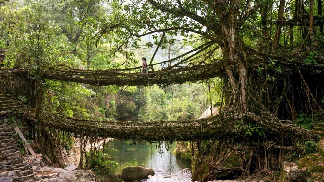 Living Root Bridge, India