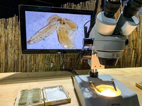 Mikroskopický svet
