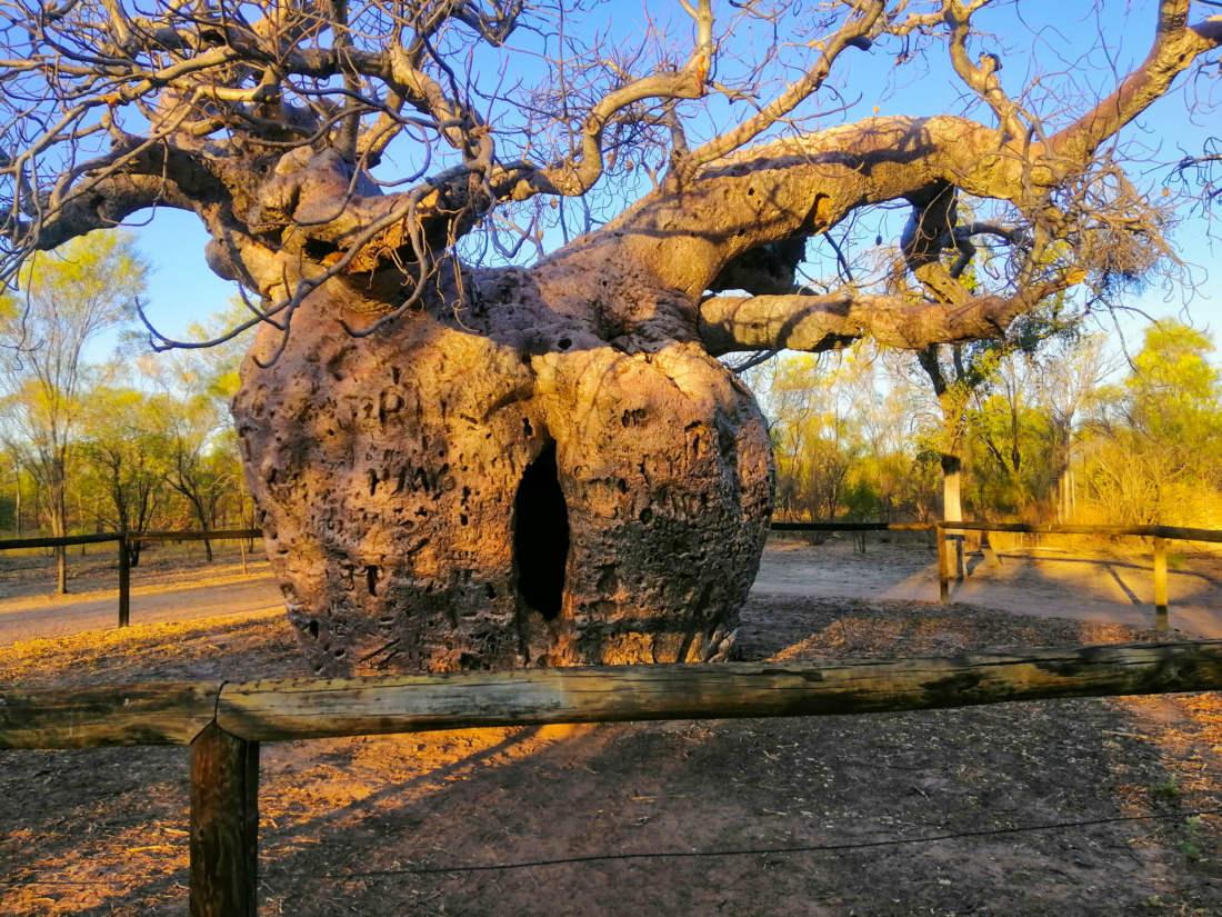 Väznica v Baobabe